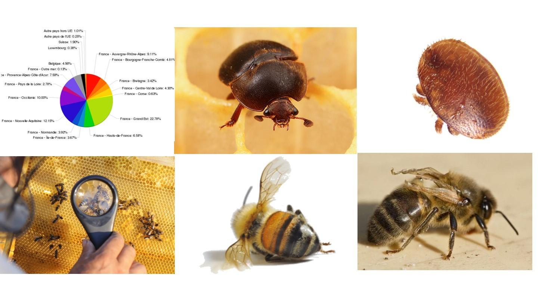 Enquete sanitaire en apiculture